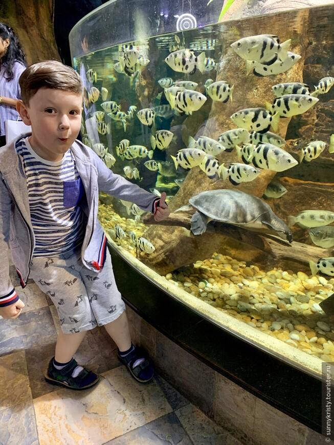 Аквариум в Дубае. Черепаха