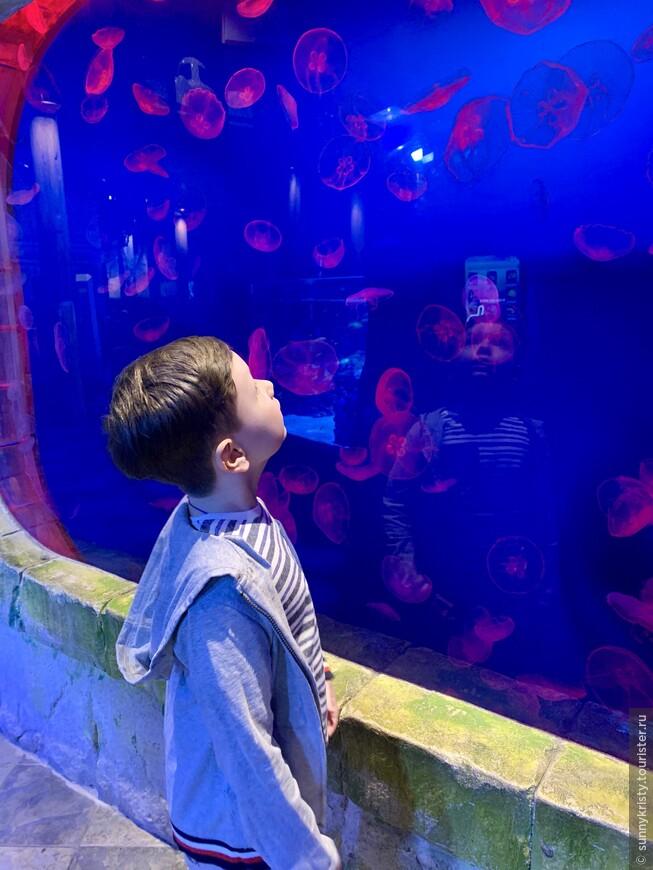 Аквариум в Дубае. Медузы.