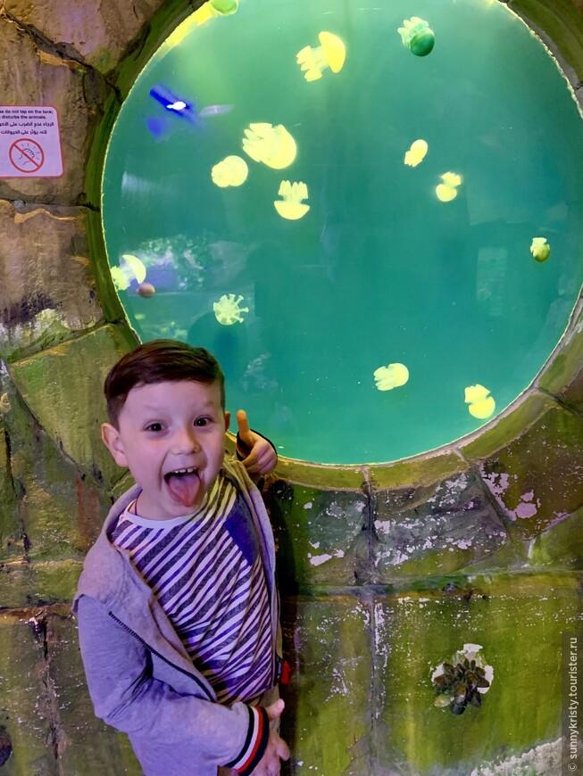 Аквариум в Дубае. Медузы в аквариуме прекрасны. Но не в море)))