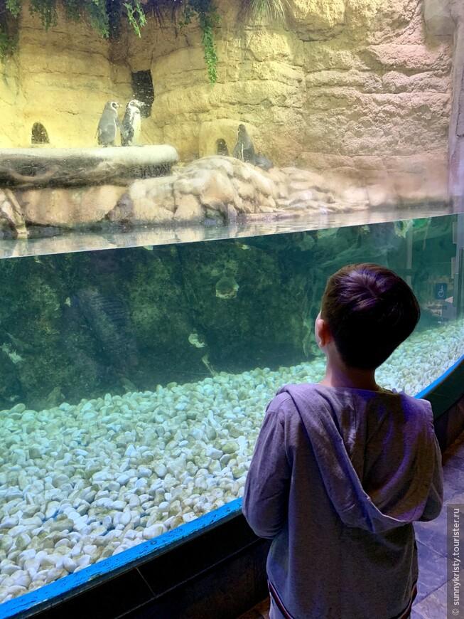 Аквариум в Дубае. Пингвины. Часть зоопарка.