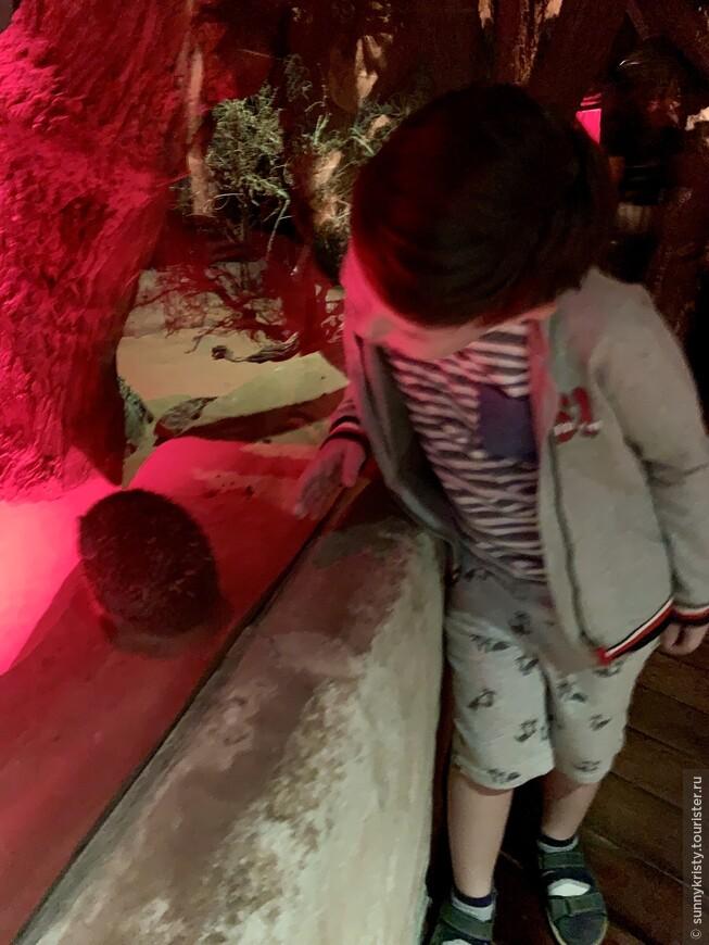 Аквариум в Дубае. Похоже на черепаху. Это уже зоопарк, так как в Дубае аквариум делится на 2 уровня: аквариум- это тоннель и зоопарк- часть последнего этажа в моле.