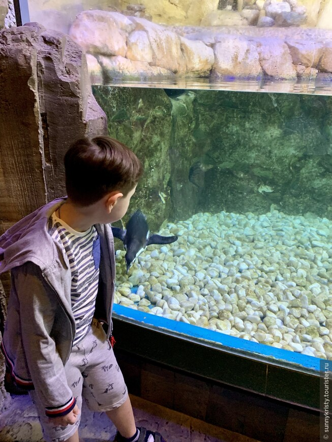 Аквариум в Дубае. Пингвины.