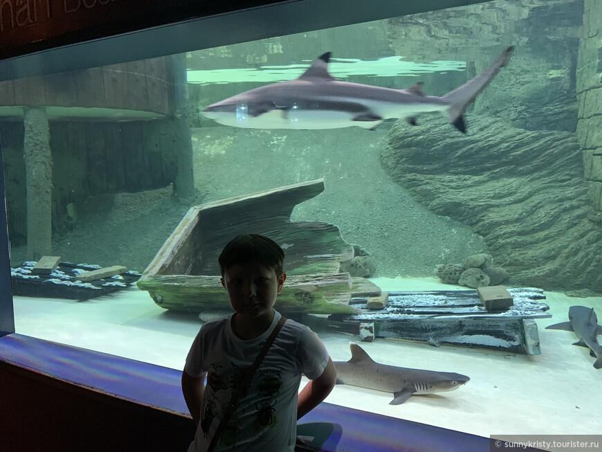 Аквариум в Шардже. Акулочки.