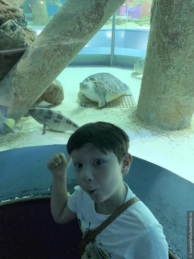 Аквариум в Шардже. Морская черепашка.