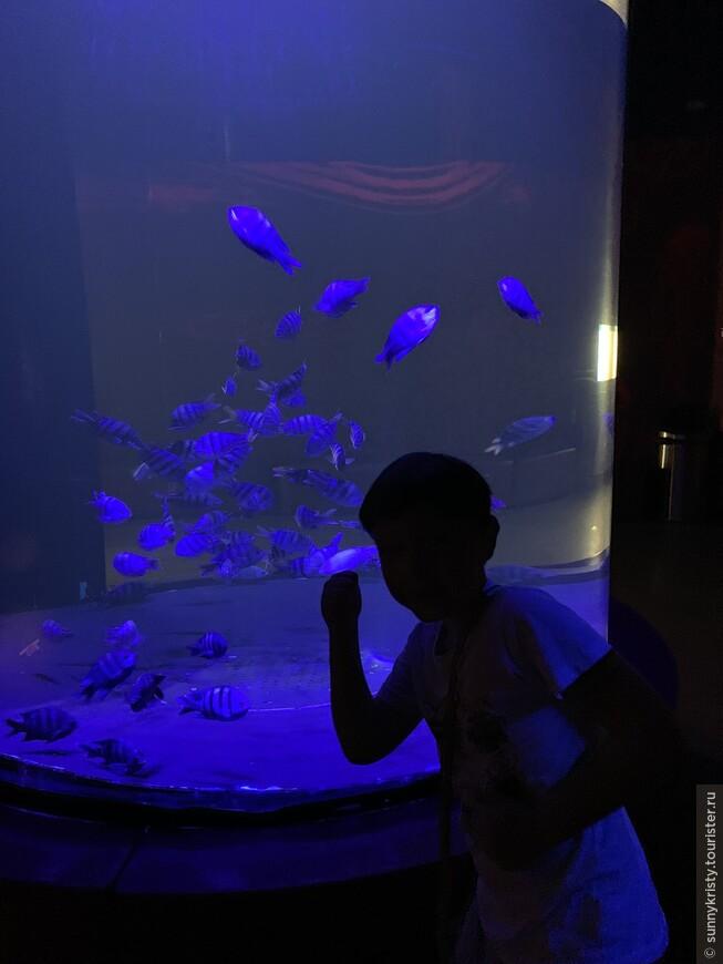 Аквариум в Шардже