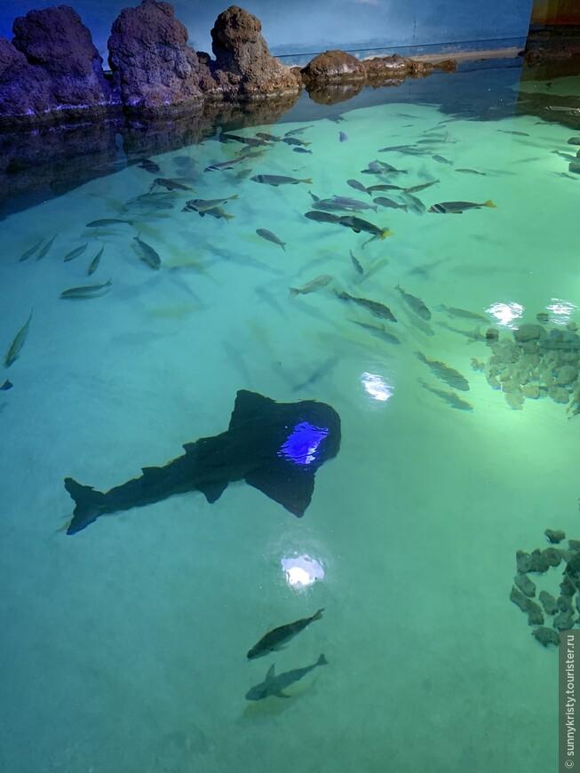 Аквариум в Шардже. В аквариуме есть такие же бассейны с черепахами.