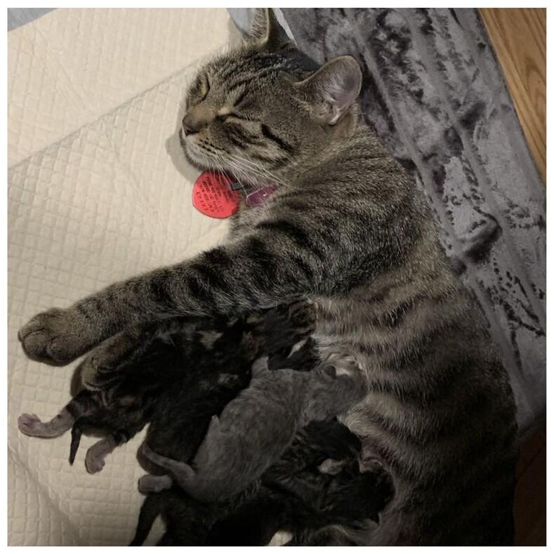 Мой дом, но не мой кот: фото животных, которые нагло ворвались в чужой дом и устроились там, как у себя (тот случай, когда не вы выбрали кота, а он вас)