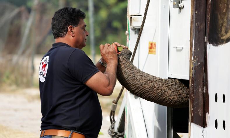 Самого одинокого слона в мире освободили после 35 лет жестокого заточения: трогательные фото животного, который впервые за долгие годы увидел другого слона