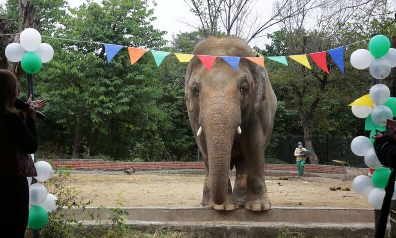Самого одинокого слона в мире освободили после 35 лет жестокого заточения трогательные фото животного, который впервые за долгие годы увидел другого слона