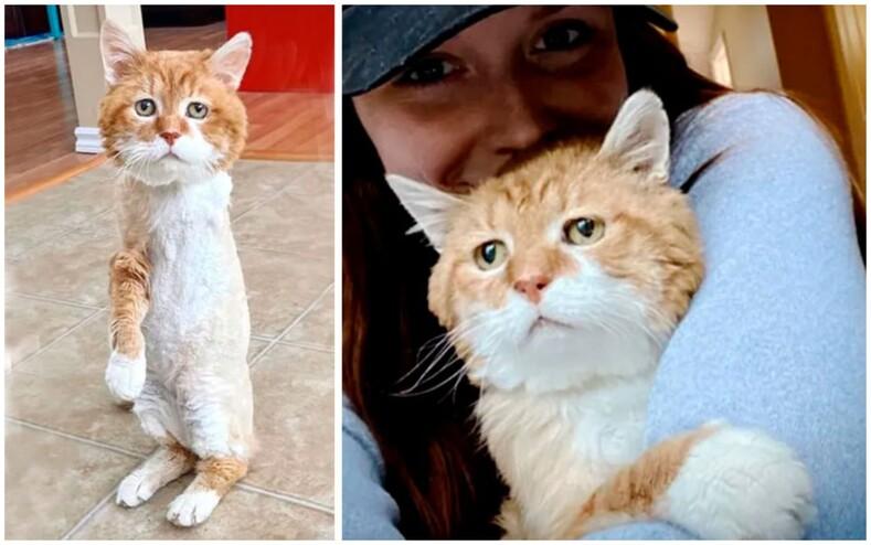 Невероятная история грустного трехлапого кота: питомец спустя 8 лет вернулся к дому старого хозяина, но тот давно умер (сосед организовал настоящую спасательную операцию)