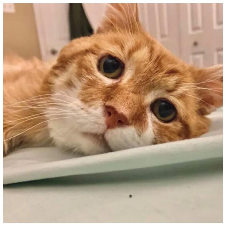 Невероятная история грустного трехлапого кота питомец спустя 8 лет вернулся к дому старого хозяина, но тот давно умер (сосед организовал настоящую спасательную операцию)