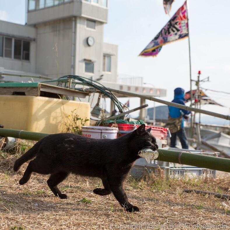 Запредельный уровень милоты 35 фото бездомных котов, сделанных на улицах Токио