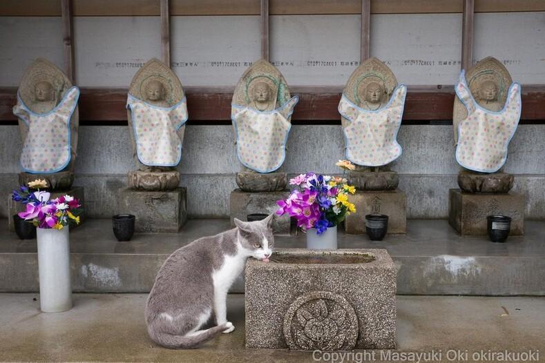 Запредельный уровень милоты: 35 фото бездомных котов, сделанных на улицах Токио