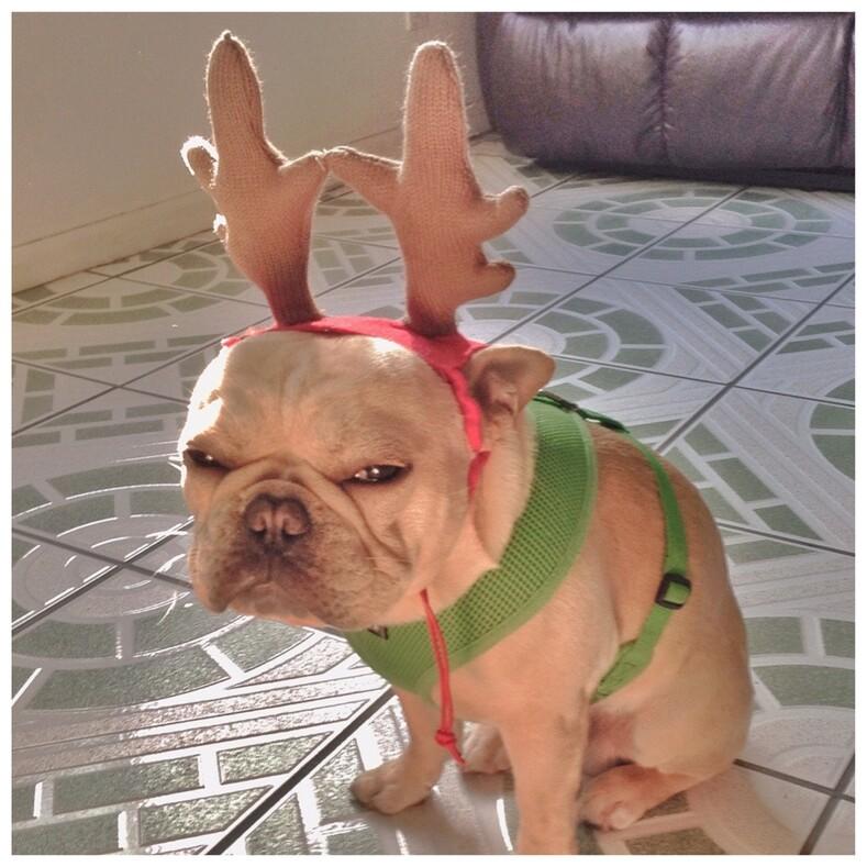 Кто-то против Нового года: смешные фото питомцев, которые всем своим видом показывают, что они вне веселья (лайфхаки о том, как испортить праздник всей семье)