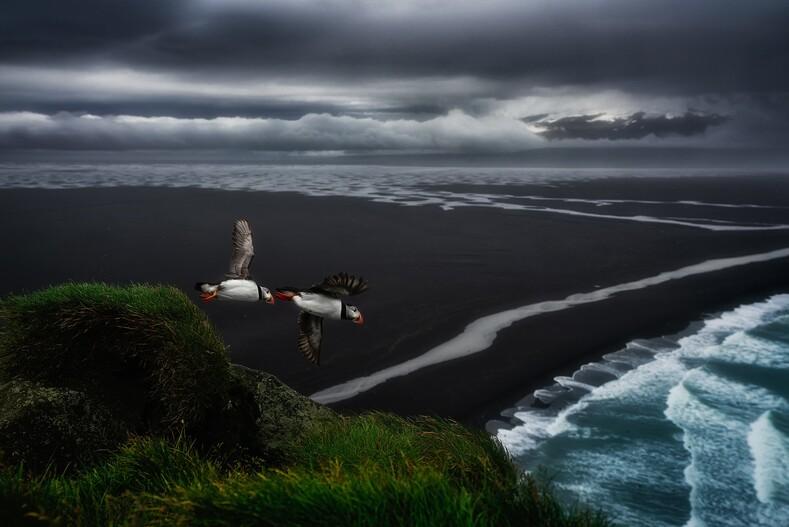 Абсолютный победитель: 20 снимков лучшего фотографа дикой природы 2020 года