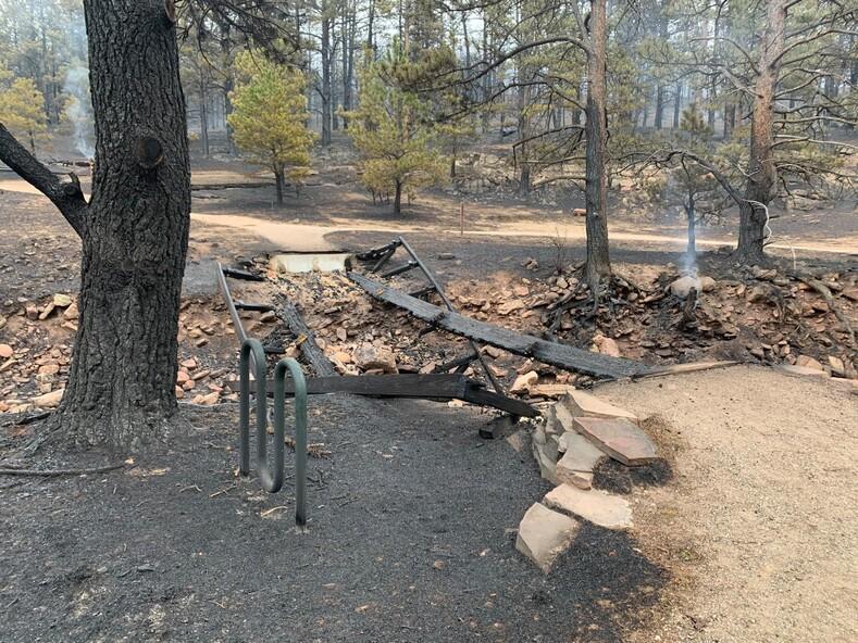Храбрый осел помог выбраться из пожара своему другу: вместе они пережили сильнейший пожар за всю историю Колорадо