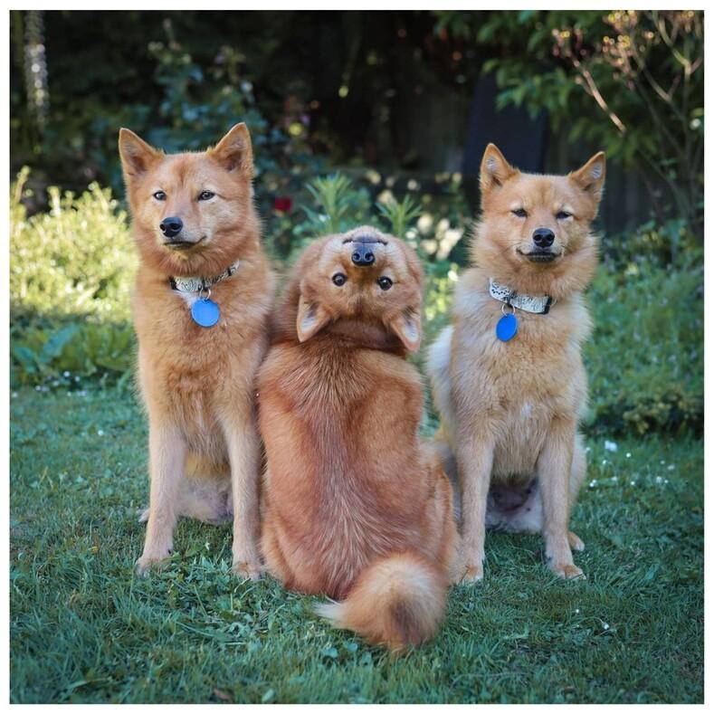 Девушка придумала для своей собаки команду демон: сейчас этот дикий трюк стал настоящей проблемой для всех снимков (тот случай, когда фото испорчены и прекрасны одновременно)
