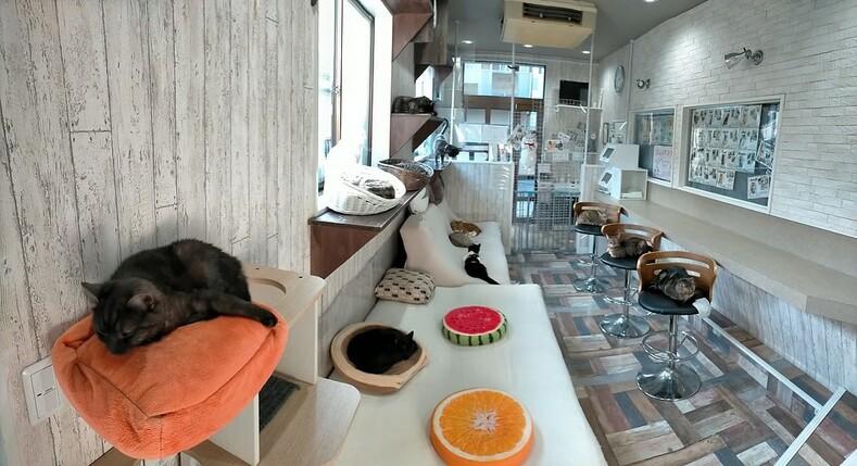 Коты на одну ночь: японская традиционная гостиница, в которой можно заказать себе в номер кошку
