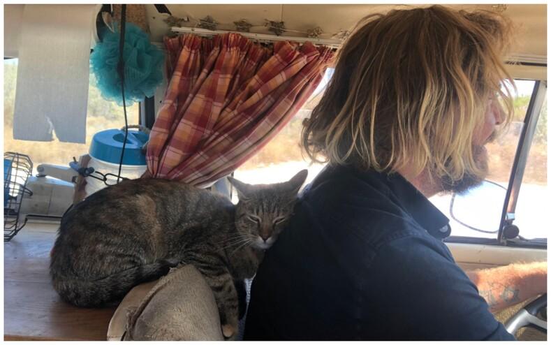 Пара застряла в Мексике на целый год, потому что не хотела возвращаться домой без спасенной кошки (питомца выходили, а вот границу пересечь не могут)