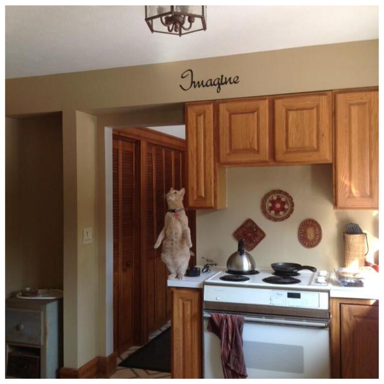 Когда кошка сломалась: пользователи показали, какими странными бывают их питомцы (фото за гранью понимания)