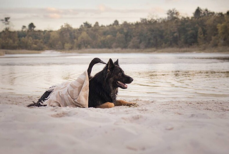 Француженка показывает особую связь между своей собакой и домашней уткой