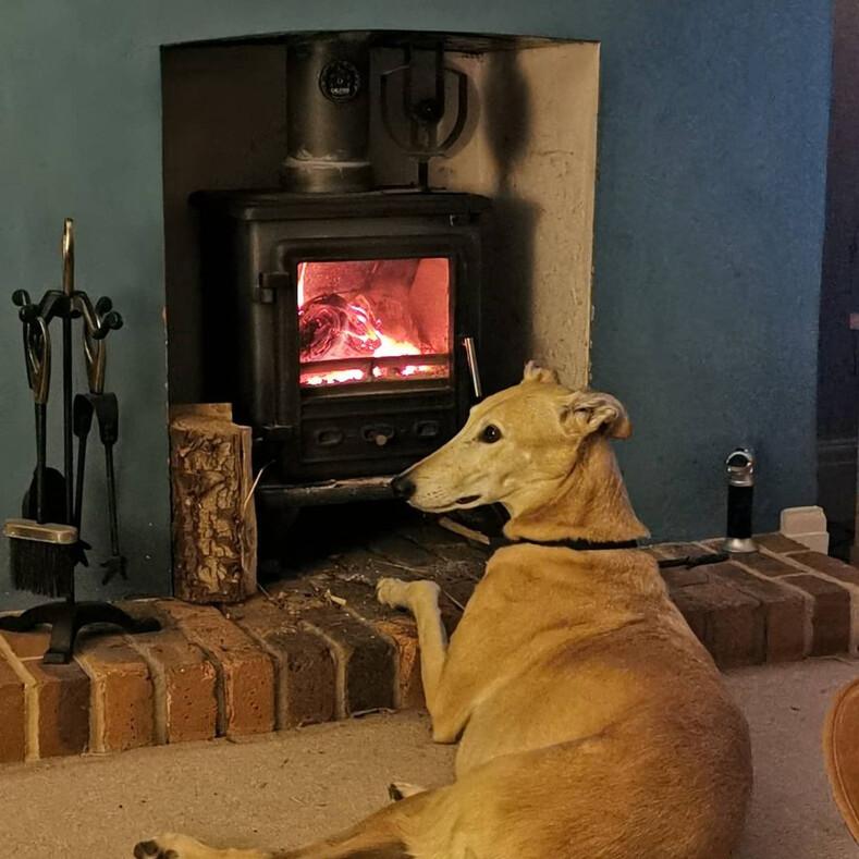 Собака притворилась хромой, чтобы поддержать хозяина с переломом: кадры, которые растрогали миллионы пользователей Сети