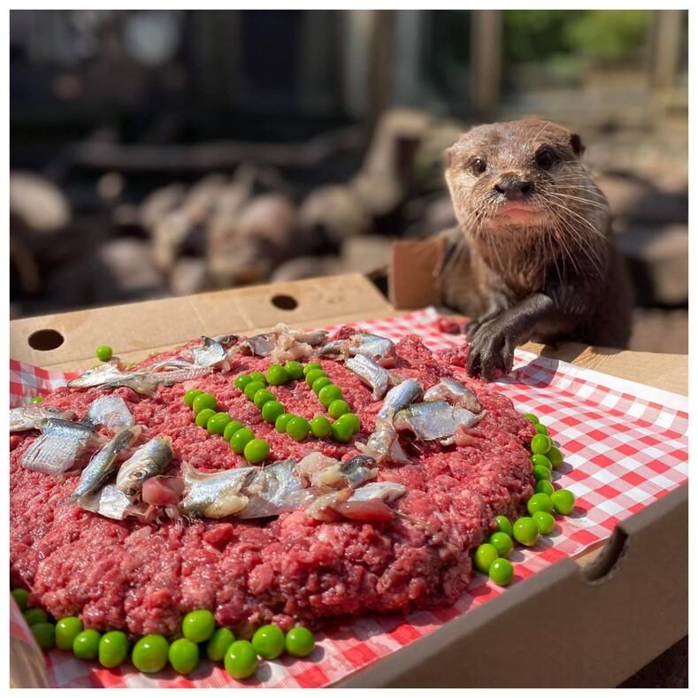 Сотрудники парка устроили выдре праздничную вечеринку с пиццей в честь ее юбилея: фото с необычного дня рождения