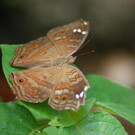 Занзибарский сад бабочек
