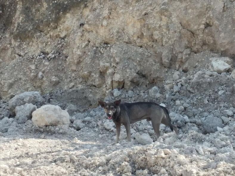 Собака привела незнакомца в горы, чтобы спасти оставленного там младенца невероятная история и фото с места событий