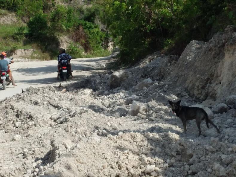 Собака привела незнакомца в горы, чтобы спасти оставленного там младенца: невероятная история и фото с места событий