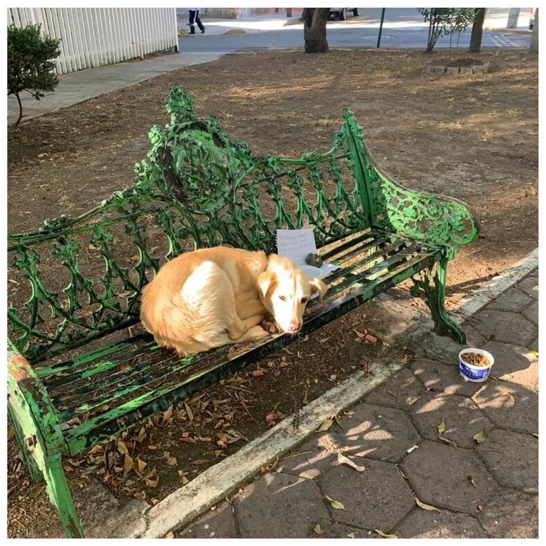 Ребенок бросил любимую собаку в парке с душераздирающей запиской, объяснив в ней безвыходную ситуацию (фото питомца до и после спасения)
