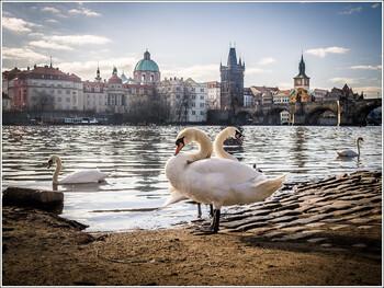 Чехия ужесточила правила въезда из-за рубежа