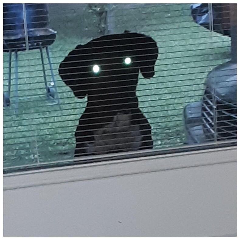 Пользовали поделились смешными снимками собак, которые обожают за всеми подглядывать (и это верх любопытства)