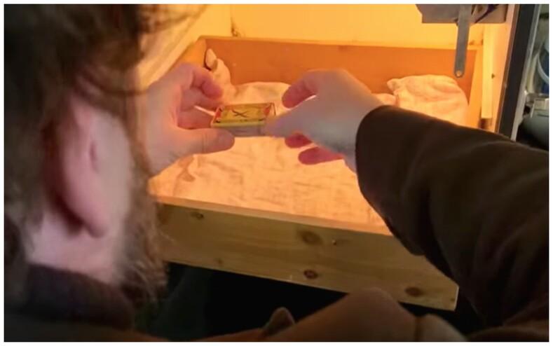 Мужчина нашел в магазине крошечное яйцо и забрал домой: фото и невероятная история о том, как самому вырастить волнистого попугая