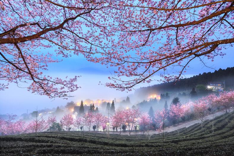Объявлены победители и призеры фотоконкурса Tokyo International Foto Awards: 30 работ, показывающих красоту и величие разных уголков нашей планеты
