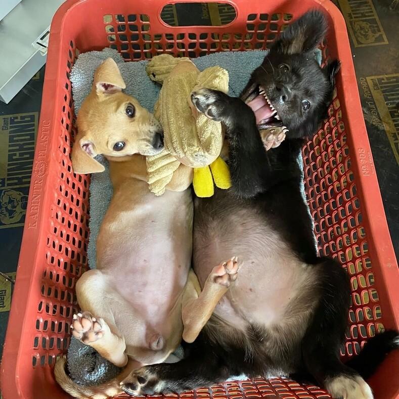 Человек, который спасает собак: шведский повар открыл крупнейший в Таиланде приют для уличных животных