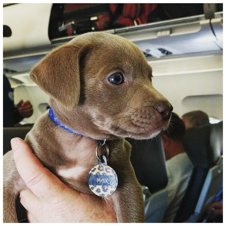 Пользователи показали фото самых милых хвостатых попутчиков 15 доказательств того, что поездка или перелет действительно могут быть веселыми