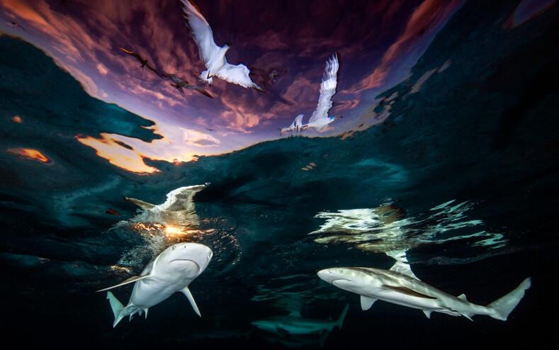 Выбраны лучшие подводные фото 2021: чарующие снимки о тайнах глубин, от которых захватывает дух (победители и призеры Underwater Photographer ofthe Year)