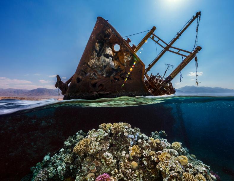 Выбраны лучшие подводные фото 2021 чарующие снимки о тайнах глубин, от которых захватывает дух (победители и призеры Underwater Photographer ofthe Year)