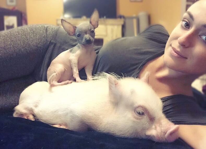 30-летняя американка устроила приют для двухсот животных в своем доме: 20 фото необычного зверинца