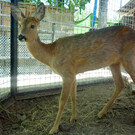 Севастопольский зоопарк