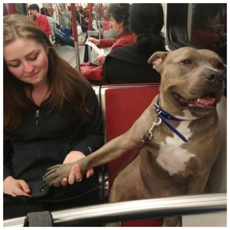 18 фото самых милых попутчиков, которых вы никак не ожидаете встретить в самолете или метро