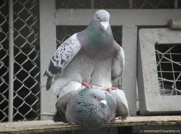Как я наблюдал за птицами