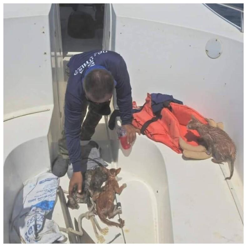 В Таиланде военный спас с тонущего судна четырех кошек: фото о том, как моряк на своих плечах переправляет животных в безопасное место