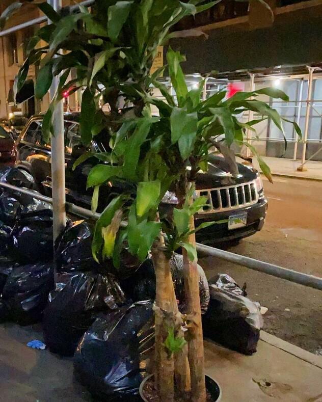 Чего только не выкидывают: одни решили избавиться от мусора, а другие посчитали эти вещи настоящим сокровищем