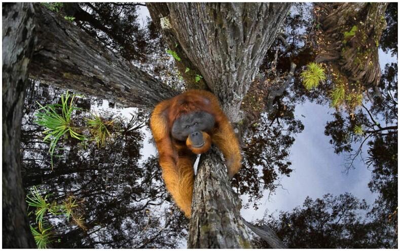 Объявлены победители World Nature Photography Awards лучшие снимки природы из разных уголков мира, от которых невозможно оторвать взгляд