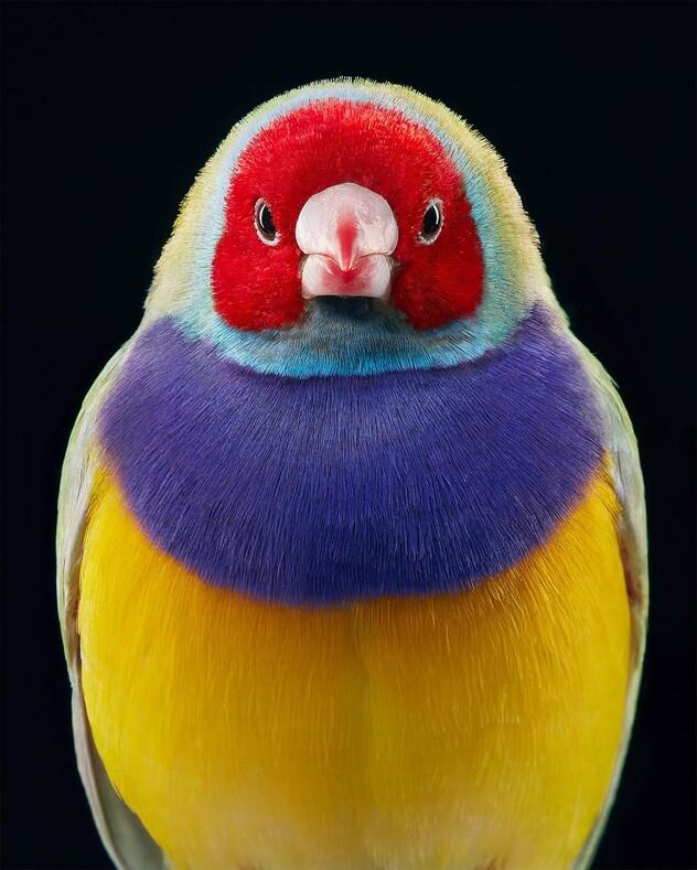 15 потрясающих портретов редких птиц британского фотографа Тима Флэча