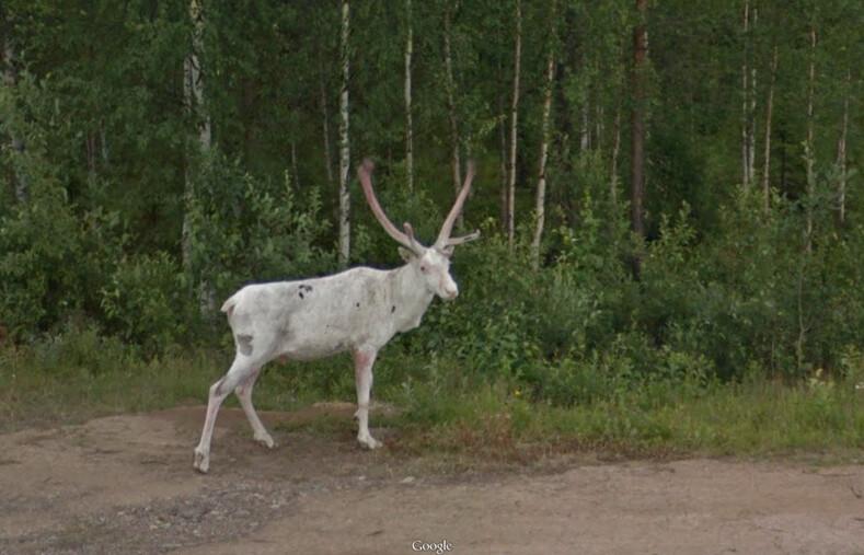 Зоркий глаз канадского художника находит странные вещи на картах Google