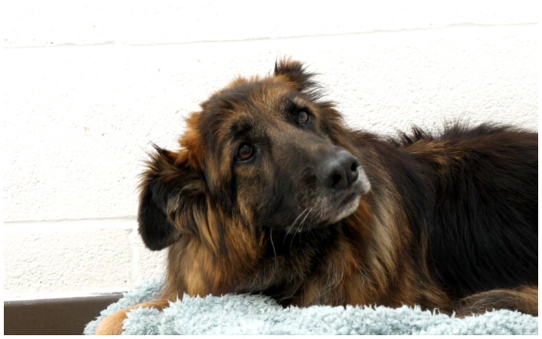 Собаку привязали к камню и бросили умирать, но она выжила и обрела новую семью (трогательная история и фото во время и после спасения)
