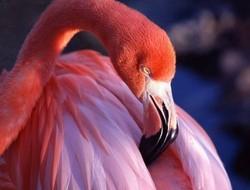 Бразилия приглашает на встречу с розовым фламинго
